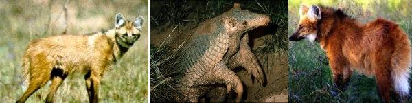 Animales en peligro de extincion en Misiones