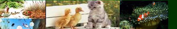 Relaciones entre  distintos tipos de animales....¿sabes que  relaciones se acontecen entre las distintas especies?
